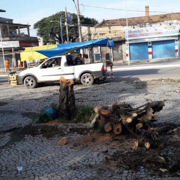 Árvores cortadas em Belford Roxo deixa população indignada com a prefeitura