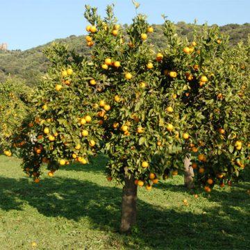 A árvore que alimenta e traz força para o povo de matriz africana