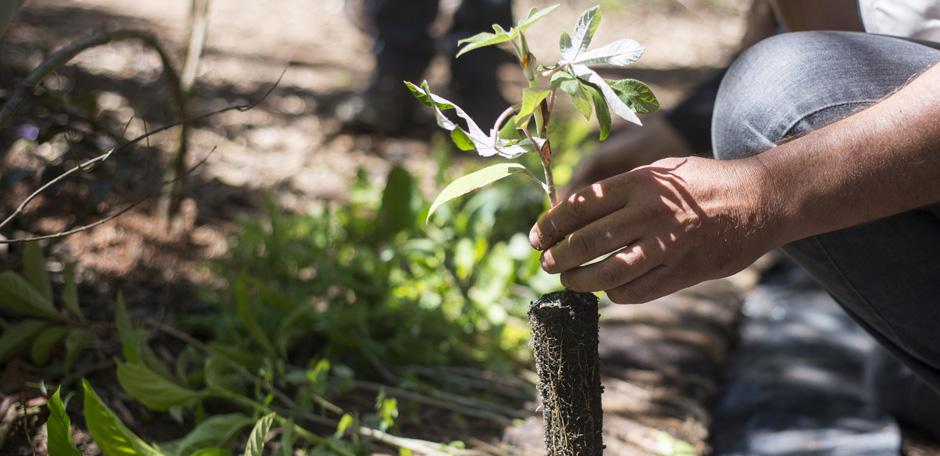"""Parque Nacional da Tijuca recebe 300 mudas de árvores em ação de plantio do """"Instituto Conhecer para Conservar"""""""