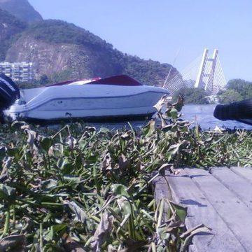 Remoção de plantas aquáticas de praia do Rio continua no fim de semana