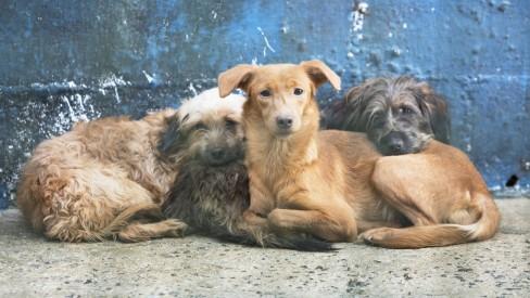Código de Defesa dos Animais vai ganhar regulamentação no Rio