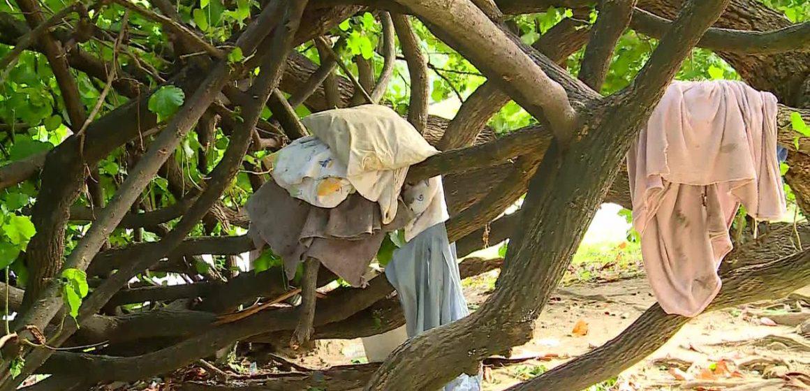 Ação contra desordem urbana no Rio encontra casa no alto de árvore