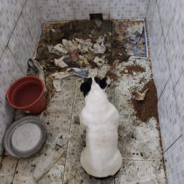 Fechado Canil clandestino com mais de 60 animais em condições insalubres