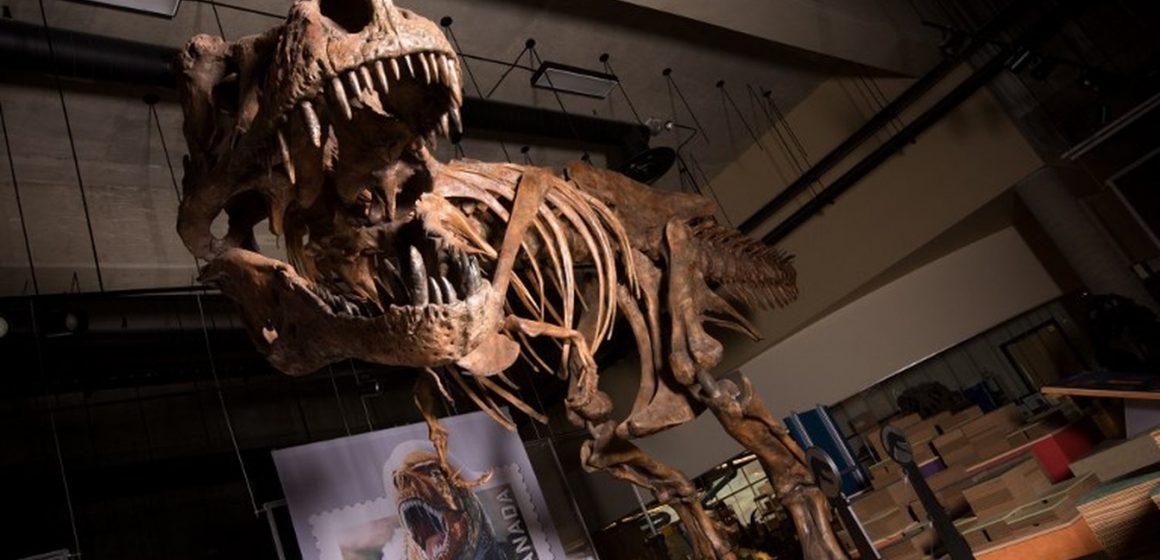 Tiranossauro rex tinha 'ar-condicionado' na cabeça, indica estudo