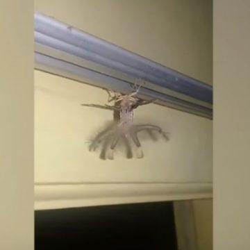Que medo! 'Monstro voador' invade casa e assusta moradores; vídeo
