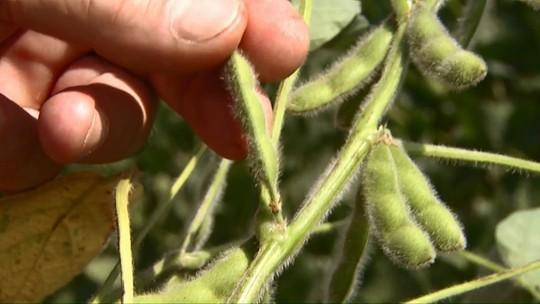 Produção agrícola no país bate recorde e atinge R$ 343,5 bilhões em 2018, diz IBGE