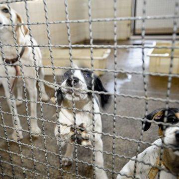 Câmara endurece penas para quem comete maus-tratos a animal doméstico