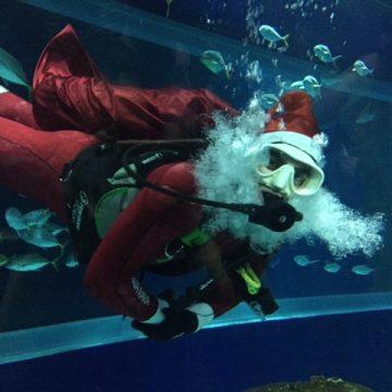 """Mergulho do Papai Noel e campanha """"A vida no mar pede ajuda!"""" abrem a programação de férias do AquaRio"""