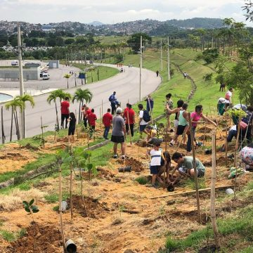 Três anos após Olimpíada, Prefeitura do Rio inicia replantio de 13 mil mudas plantadas por atletas