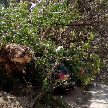 Árvore cai e interrompe parcialmente trânsito no Cosme Velho, Zona Sul do Rio