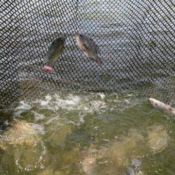 Governo regulamenta pesca esportiva em áreas de conservação ambiental