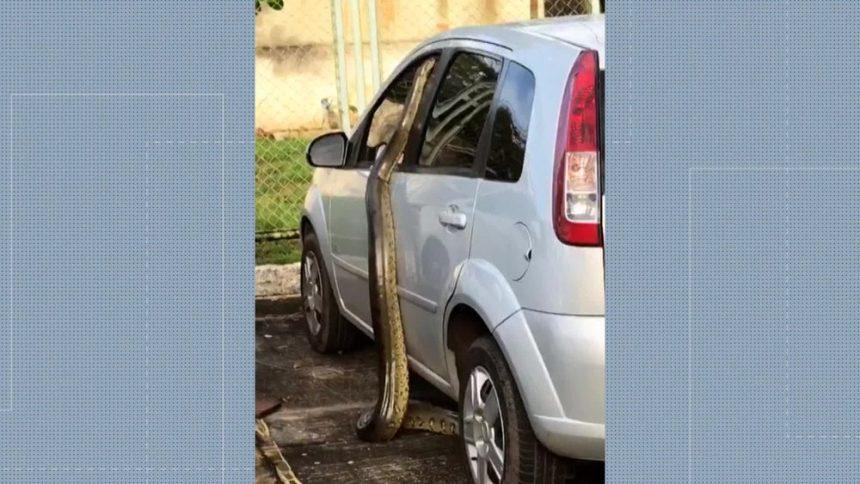 Cobra aparece no estacionamento de hospital em Jacarepaguá, na Zona Oeste do Rio