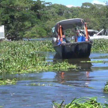 Gigogas atrapalham transporte de passageiros nas lagoas da Barra e de Jacarepaguá
