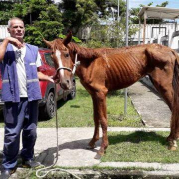 Prefeitura resgata animais abandonados em Campo Grande