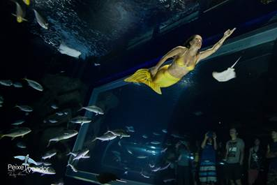 AquaRio promove a primeira edição da Dive Week