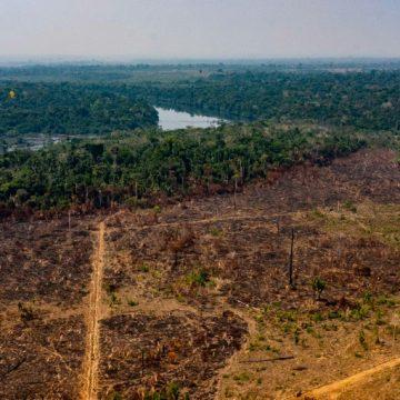 Desmatamento da Amazônia registra maior taxa em maio desde 2016