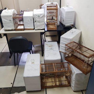 Polícia Civil apreende 44 pássaros silvestres que eram comercializados ilegalmente em Nova Iguaçu