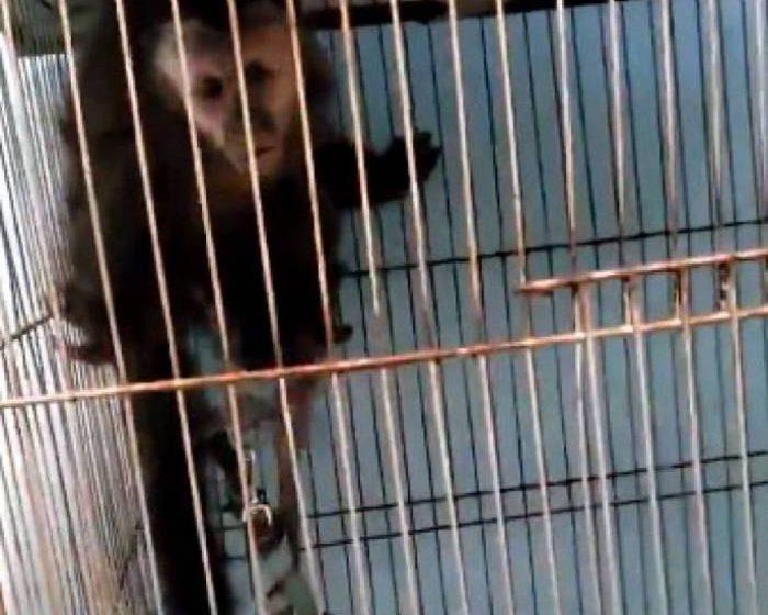 Grande operação da PM encontra macaco dentro de gaiola em cativeiro na Vila Kennedy