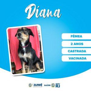 Subsecretaria de Proteção Animal do RJ realiza feira de adoção presencial na Zona Norte do Rio