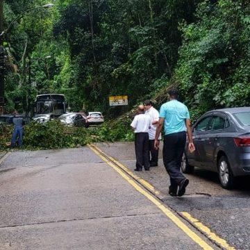 Queda de árvore interdita Estrada de Furnas, no Alto da Boa Vista