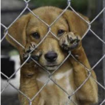Rio pode ter lei que obriga os condomínios residenciais e comerciais a comunicar maus-tratos aos animais