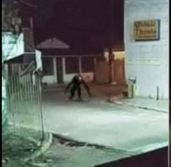 Criatura estranha assusta moradores de ilha na Bahia