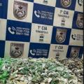 Grande quantidade de drogas escondida em área de mata em Teresópolis é apreendida pela PM